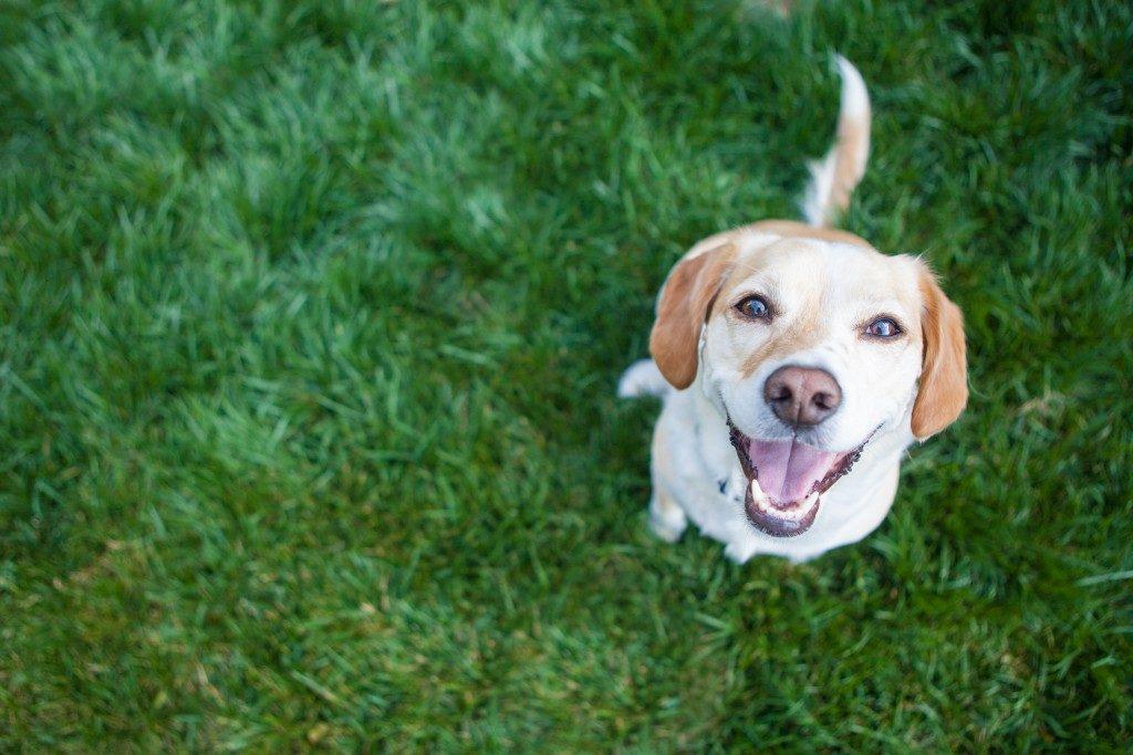 doggo in a garden