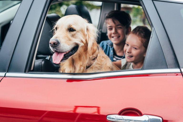 family pet in car